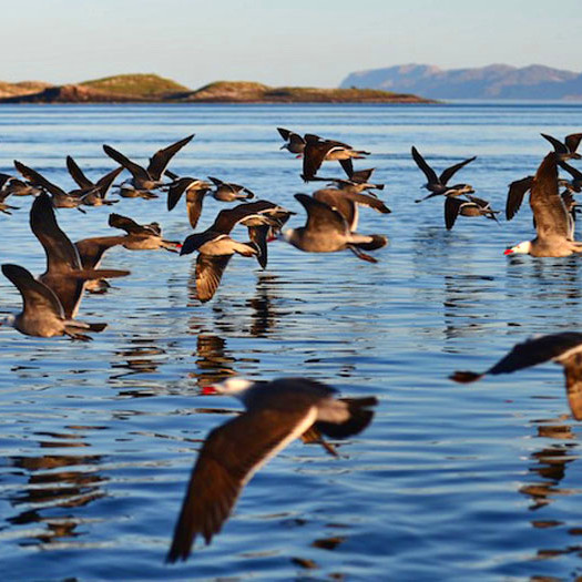 Spring in the Sea of Cortez