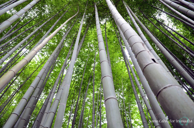 Sagano Bamboo Forest in Arashiyama, Kyoto, Japan