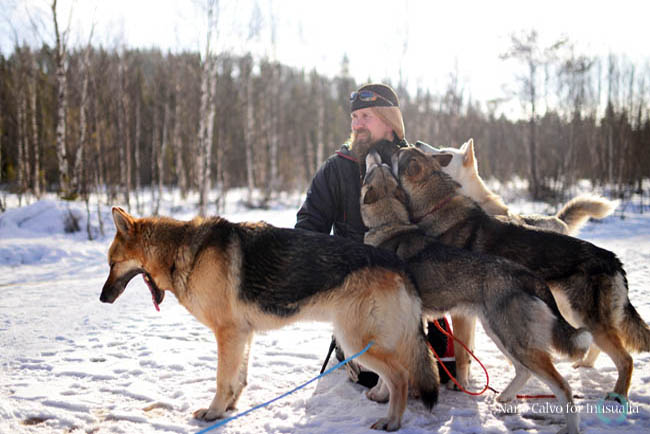 Group of lovely dogs kissing young man. Wilderness husky sledding taiga tour with Bearhillhusky in Rovaniemi, Lapland, Finland